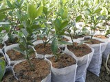 Non-woven fabric used in seedling bag